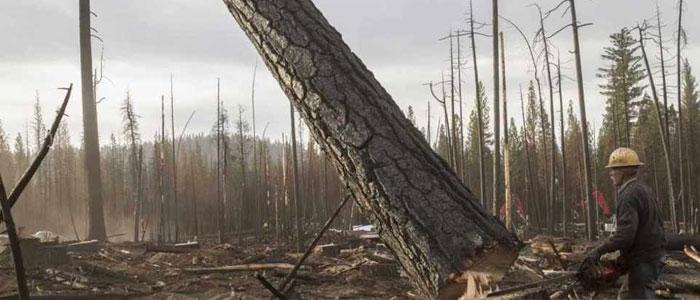 تخریب محیط زیست